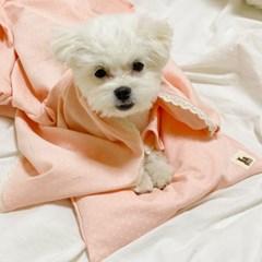 오가닉 도트 꿀잠 사계절 강아지블랭킷 단품