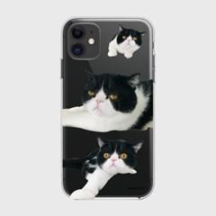 [젤리]Cat