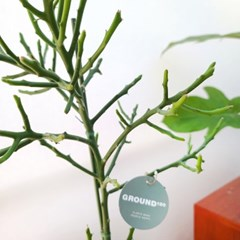 시원시원 길쭉길쭉한 중형화분 청기린 도기화분