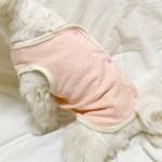 개달당 오가닉 솜사탕 강아지 고양이 수면조끼_강아지옷 강아지잠옷