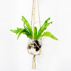 행잉 수경식물 아이비 테이블야자 아비스고사리 가습효과 공기정화