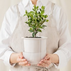 [숲 만드는 반려나무] 치자나무, 순백의 우아한 향기