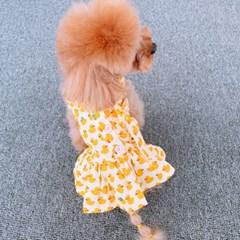 도그웨그 여름 원피스 강아지 고양이 옷