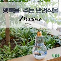 특별사은품 수경재배 반려식물 행운목 마리모 어항  LED 전구 DIY 선