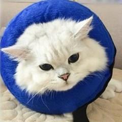 강아지 넥카라 고양이 깔대기 목보호대 수술후 상처케어