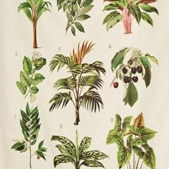 [모던하우스] 그라피크 야생나무 식물도감 패브릭포스터
