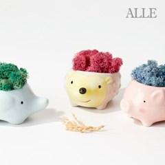 1+1 공기정화식물 스칸디아모스 아기동물화분 9종