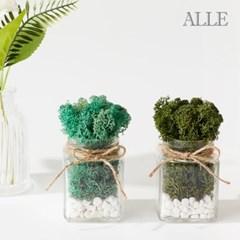 1+1 공기정화식물 스칸디아모스 사각유리병 화분 9종