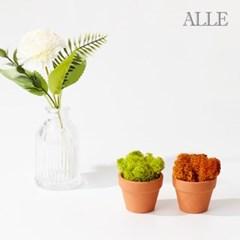 1+1 공기정화식물 스칸디아모스 미니화분 9종