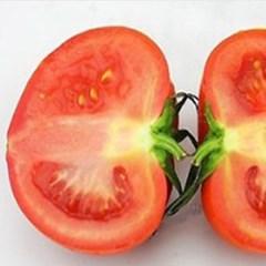 [남도장터] 완숙 토마토 5kg 3번과