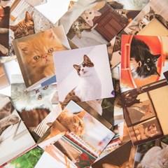 고양이 사진 미니 조각 스티커 다꾸용품