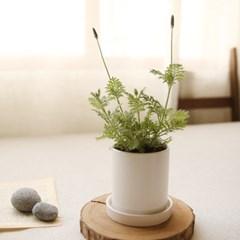 [plant] 향기좋은식물 허브화분 5종_(981660)