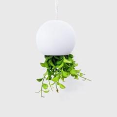 jellyfish [미니 디시디아 거꾸로 행잉화분]