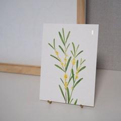 인테리어 엽서 미모사