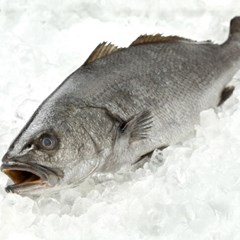 국내산 자연산 반건조 민어 조기 5미 (37cm440g내외)