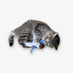 Anchovy Catnip Toy (2colors)