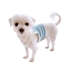 [1+1/무료배송] 베리굿 강아지 크롭 나시 티셔츠