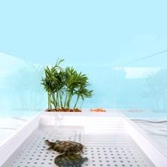 반수생거북이집 어항세트 분리형수조 레이저백 커먼머스크 이스턴머