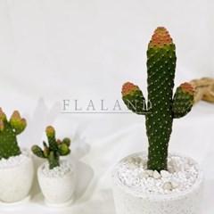 플라랜드 공기정화 인테리어식물 딸기코 만세선인장 테라조화분