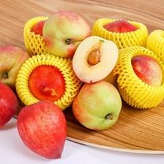 고당도 신비 복숭아 5kg 특대(31-40과) 제철과일