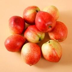 고당도 신비 복숭아 3kg 특대(16-20과) 제철과일