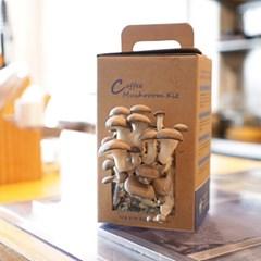 집에서 키우는 커피버섯키트(느타리버섯)