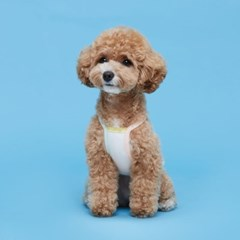 플로트 파스텔콤비나시 강아지옷 화이트