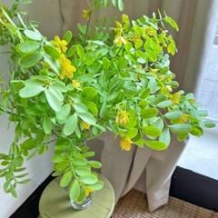 산뜻한 컬러감의 아카시아 꽃 가지 - 인테리어조화