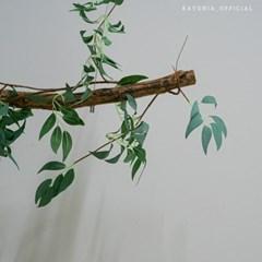 까유니아 감성 조화 : 버드나무 덩쿨