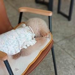 개달당 유모차 카시트 휴대용 강아지 베개 매트 끈 3종 SET