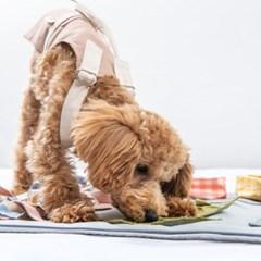 케이블랑 노즈워크 담요 SET (담요+옵션5종) 강아지장난감