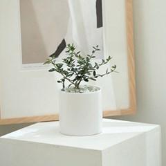 DIY 꾸미기 앙리마티스 감성화분 올리브 나무