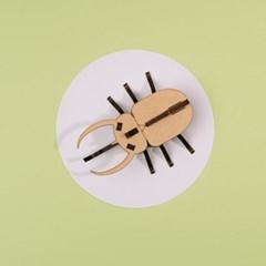 [DIY 코카서스 장수풍뎅이 만들기] 엄마표 집콕놀이 취미 키트