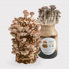 무럭무럭 표고버섯+느타리버섯 키우기 키트