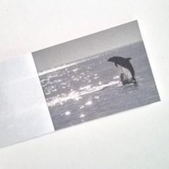 swimming dolphin 메모지