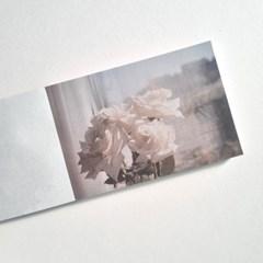 white rose 메모지