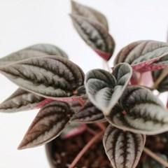 공기정화 식물 멘도자