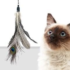 고양이 낚시대 사냥 반려묘 깃털 장난감 5종세트