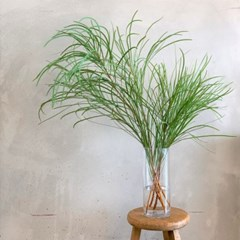 바커부쉬 그린소재 생화 그린 가지 공중식물