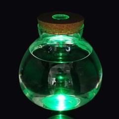 마리모 키우기 LED 유리병 반려식물 테라리움