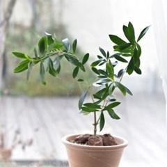 올리브나무 이태리토분 인테리어 소품 거실화분