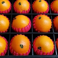 선물세트 호주산 네이블 오렌지 12개입