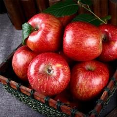 정품 가을 햇 빨간 사과 실중량 4kg(중과/18과내외)