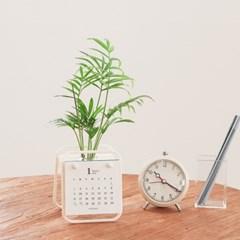 2022년 달력 (식물+화분 SET) 호야 행운목 남천 수경재배 식물캘린더