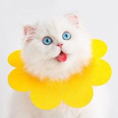 고양이 강아지 소프트 옐로우 넥카라 그루밍 방지 XS