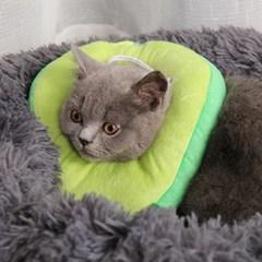 고양이 강아지 쿠션 넥카라 그루밍 방지 5종 아보카도