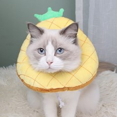고양이 강아지 쿠션 넥카라 그루밍 방지 5종 파인애플