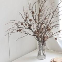 낙엽송 생화 드라이플라워 가을겨울 인테리어소품