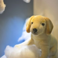 4713 래브라도 강아지 동물인형/35cm.L
