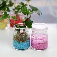 수경재배-레인보우